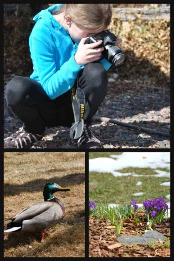 search for signs of spring with a camera
