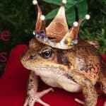 Fairy Tales: Picture Books, Chapter Books, and Writing Ideas