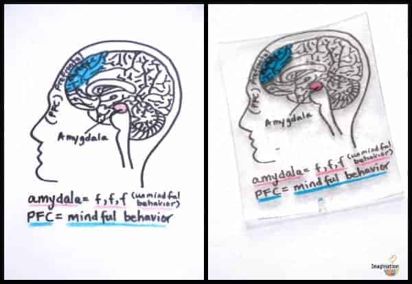 shrinky dink brain