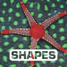 Picture This Shapes
