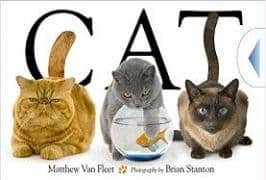 CAT Pawsitively Catilicious Cat Books for Kids