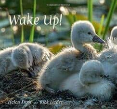 Wake Up! by Helen Frost New Spring Books for Kids About Nature and Animals