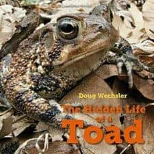 nonfiction picture book toads 2017