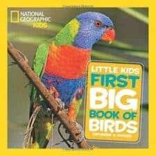 best children's books about birds for kids