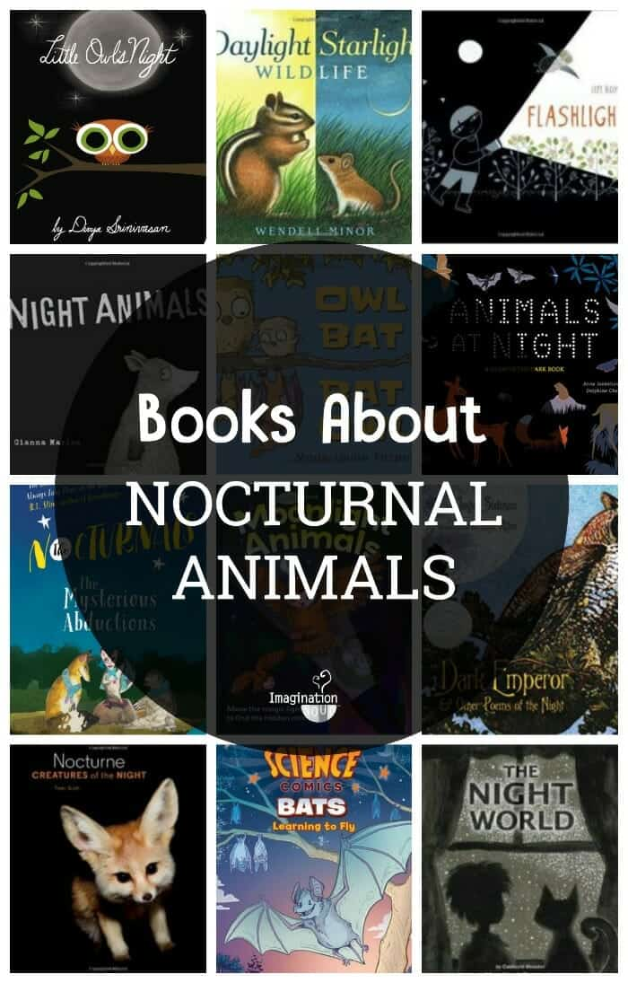 children's books about nocturnal animals
