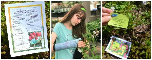 BLOOM! Lesson Plans & Activities for Middle School Students About Plants