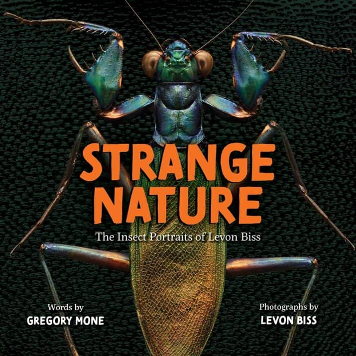 insect book for kids